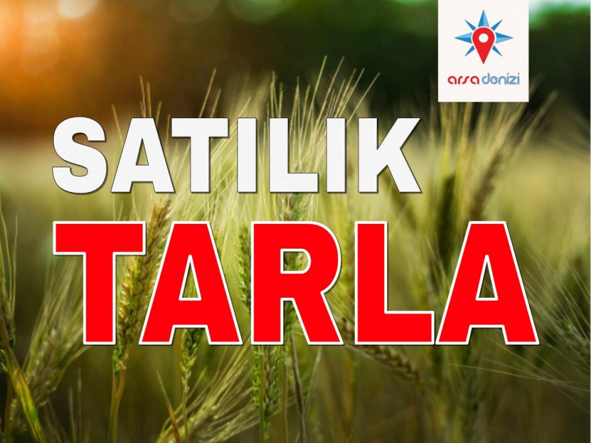 Çatalca İzzetin'de 53 DÖNÜM Satılık Tarla - Büyük 0