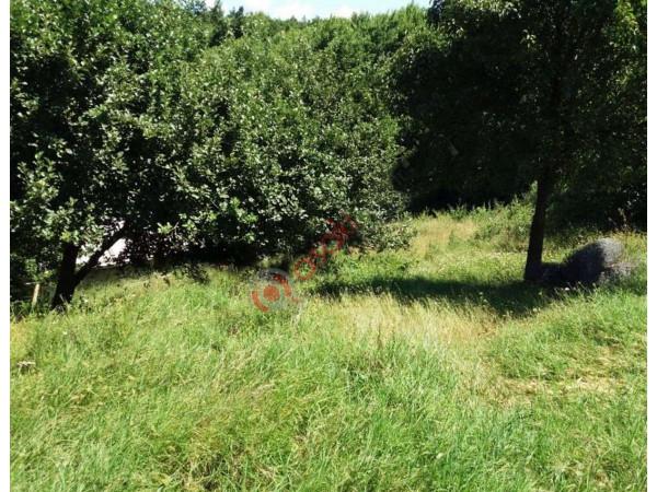 Tekirdağ çorlu'da Satılık Bağ &  Bahçe
