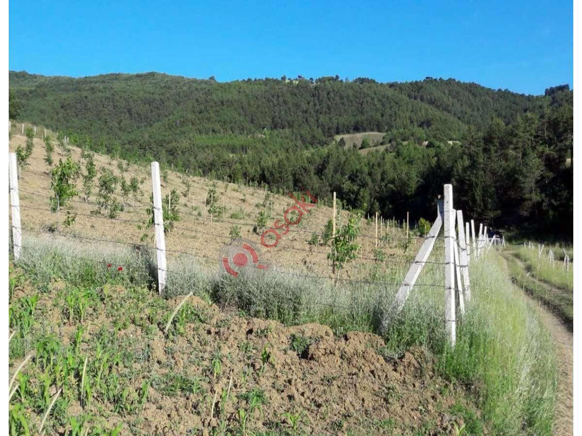 Sakarya Gevye'de Içerisinde 500 Adet Ceviz Ağaçlı Arazi - Büyük 1