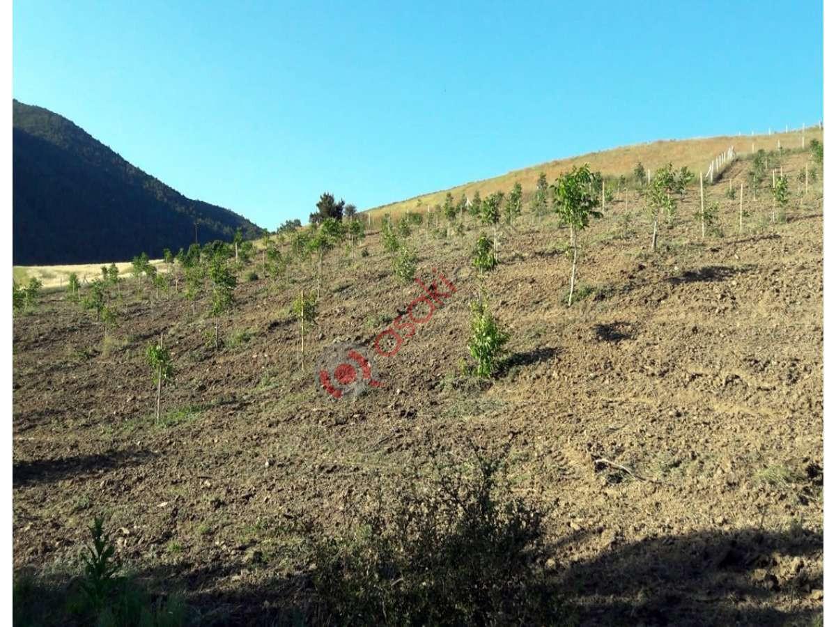 Sakarya Gevye'de Içerisinde 500 Adet Ceviz Ağaçlı Arazi - Büyük 4