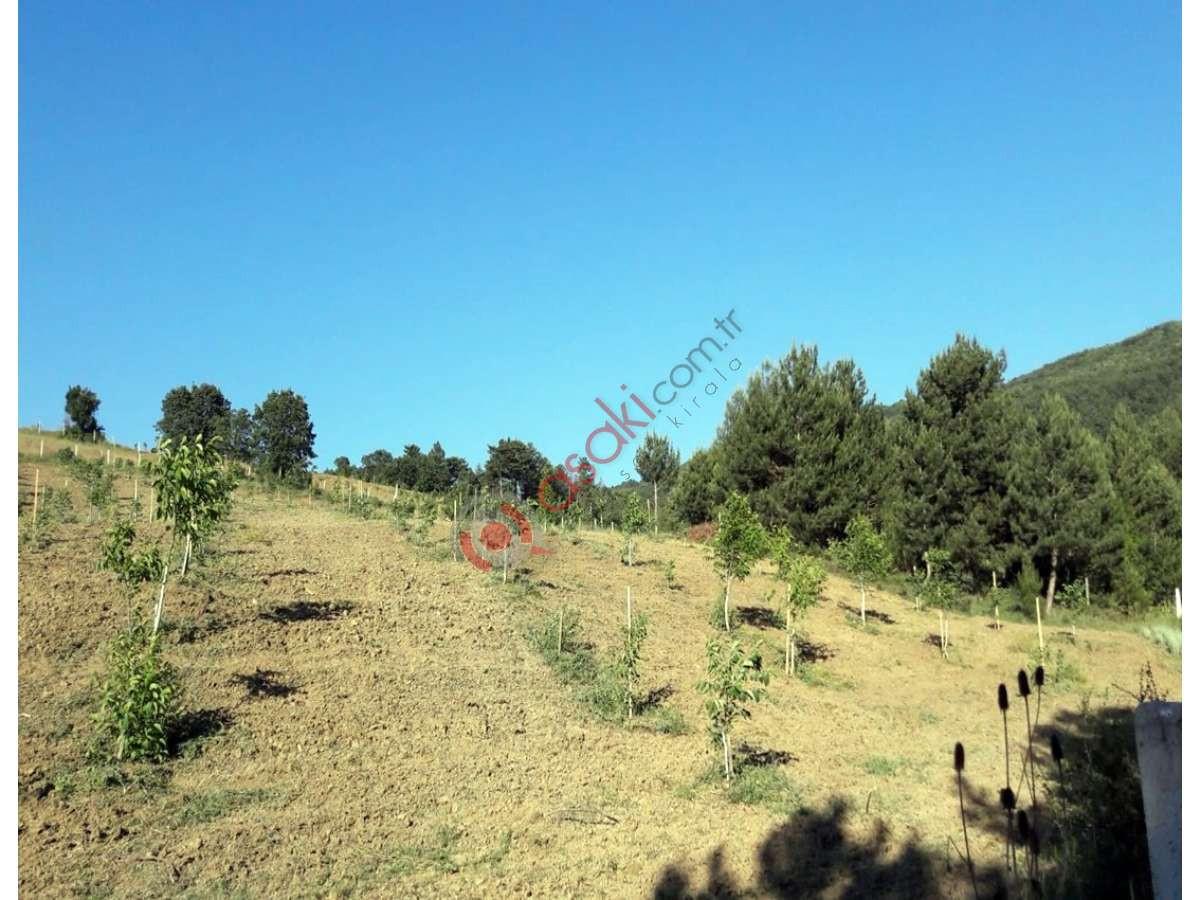 Sakarya Gevye'de Içerisinde 500 Adet Ceviz Ağaçlı Arazi - Büyük 7