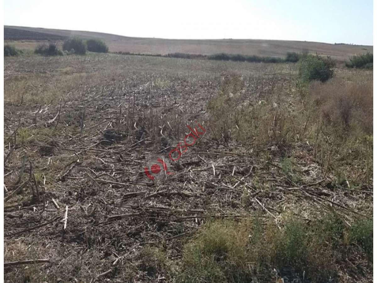 Tekirdağ Ergene'de Hayvancılığa çifliğe Uygun Arazi - Büyük 0
