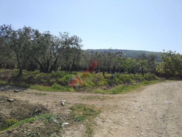Erdek merkezde içinde zeytin ağaçları olan arsa satılık