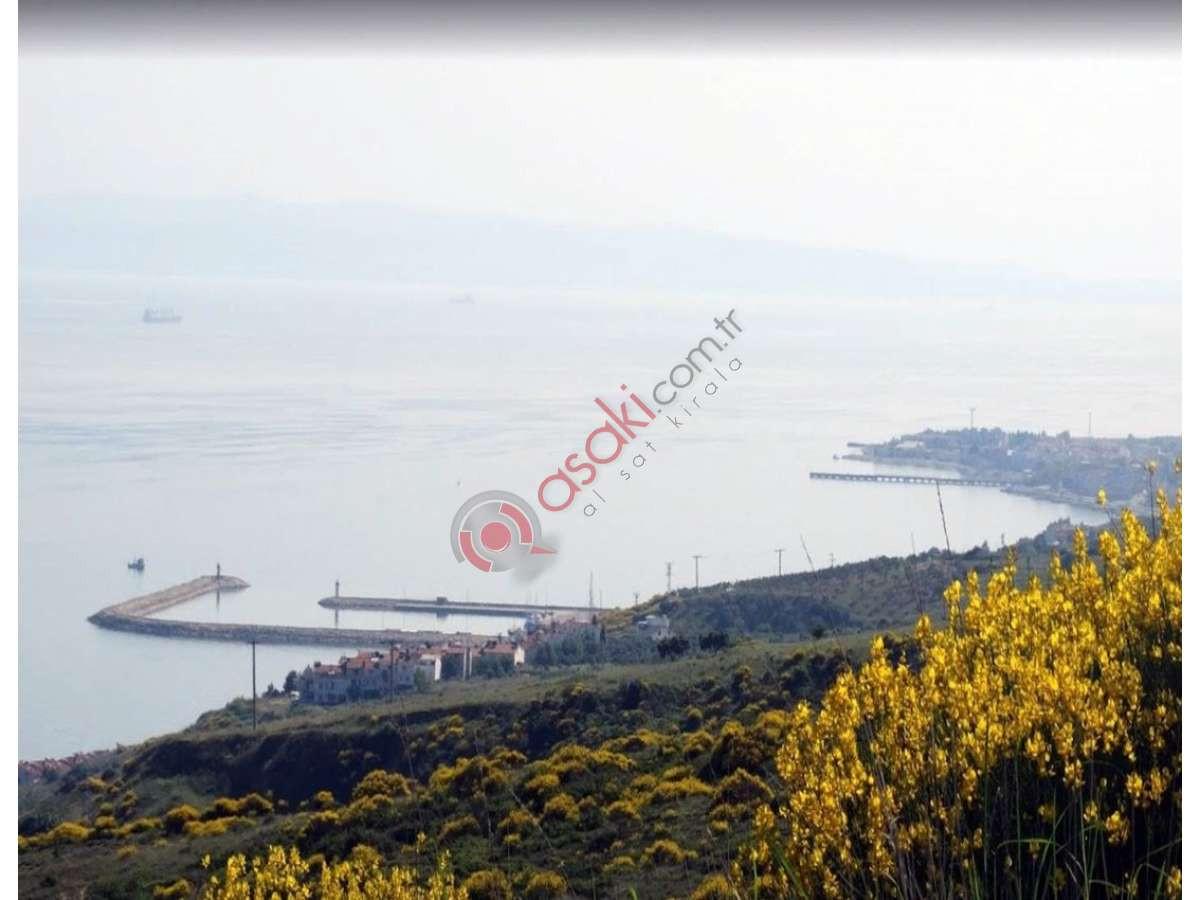 şarköy'de Satılık Deniz Manzaralı Ev Yapmaya Uygun Zeytinlik - Büyük 0