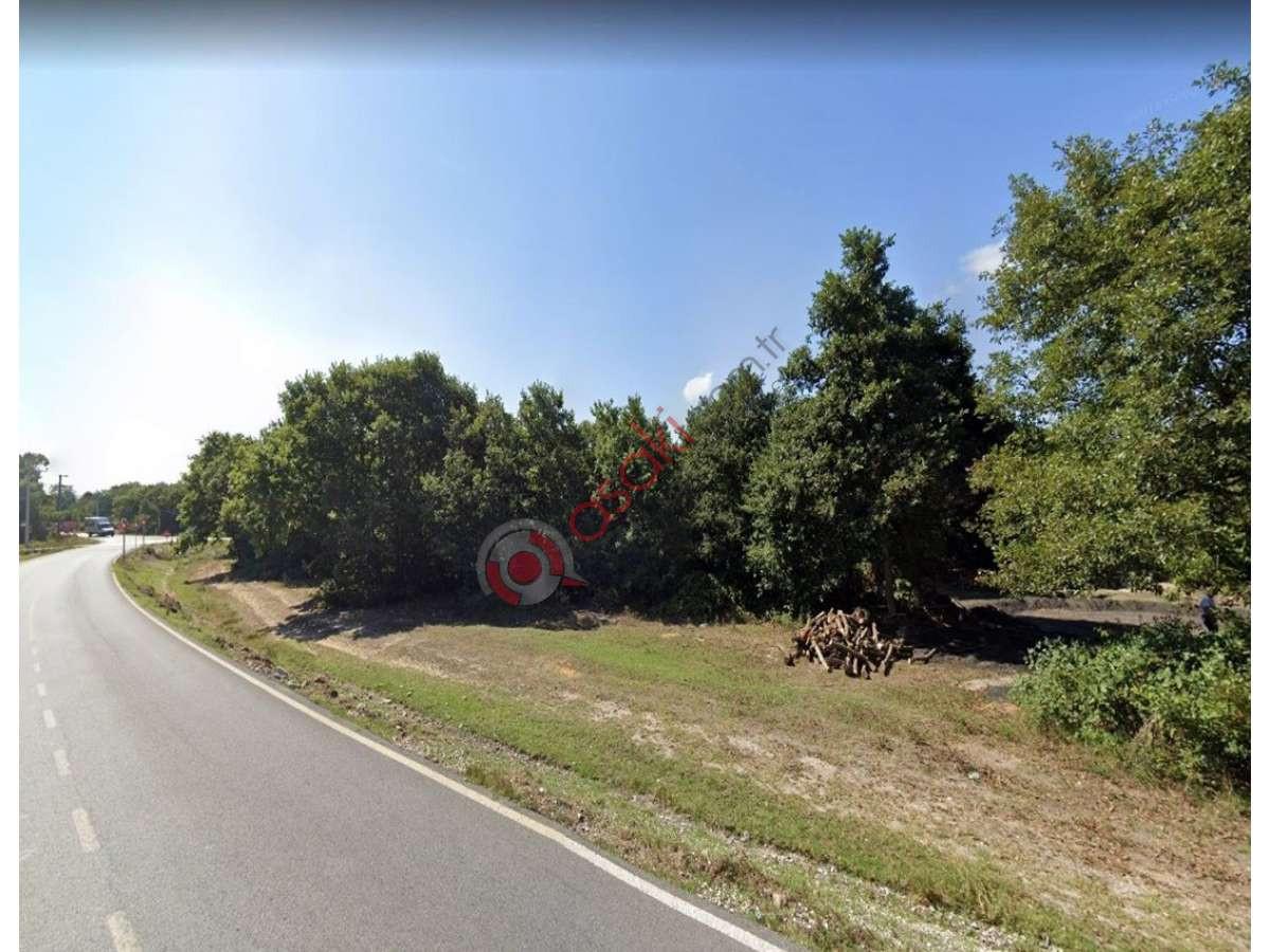Silivri Büyüksinekli Köyünde 20 Dönüm Satılık Arazi - Büyük 0