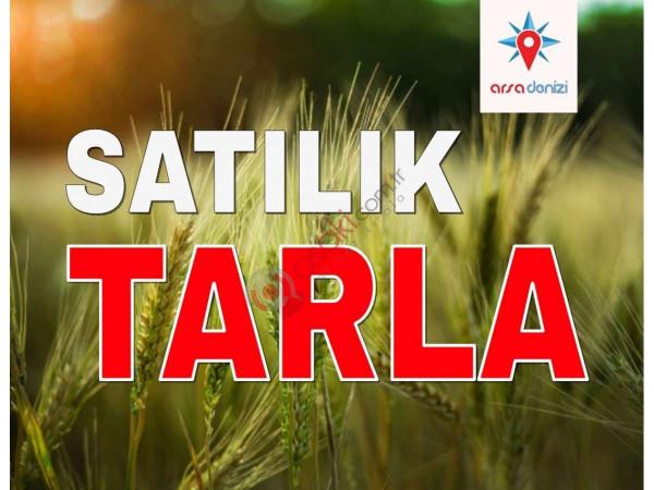 Silivri Fenerköy'de Satılık 15 Dönüm Tarla
