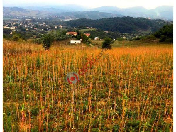 Silivri Büyükçavuşlu'da Satılık Tarla