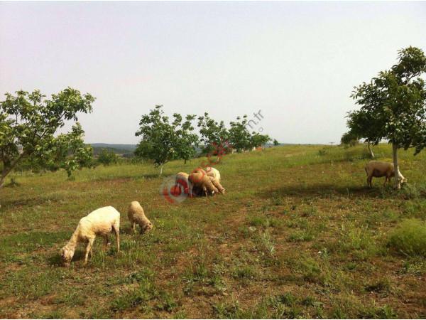 Edirne Keşanda Satılık Kurulu çiftlik