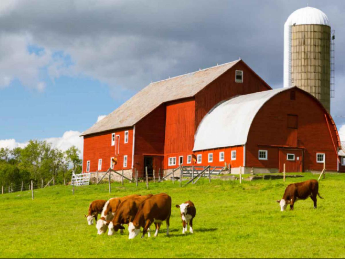 20 25 dönüm kiralık büyük baş hayvan çiftliği arayışımız var - Büyük 0